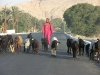 Egypt2006 77